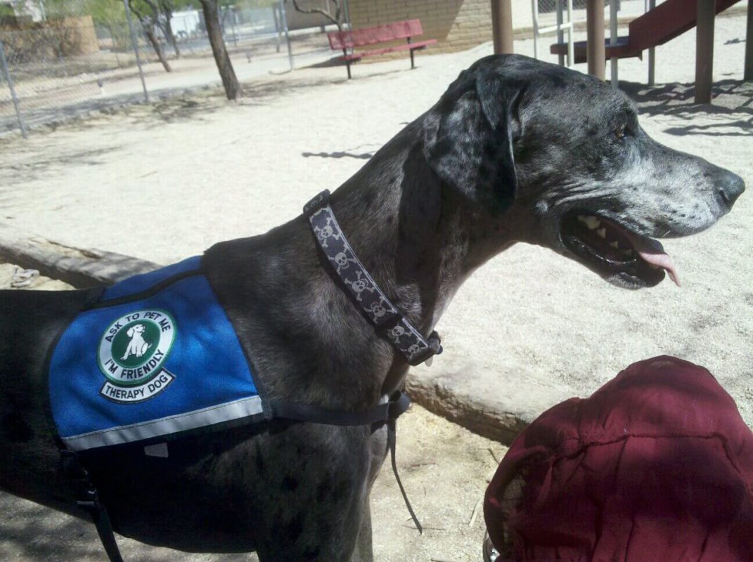 Canine Therapists: the 4-legged witness
