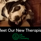 Meet Our New Therapist!